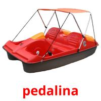 pedalina picture flashcards