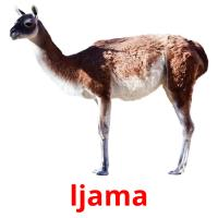 ljama picture flashcards