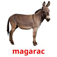 magarac picture flashcards