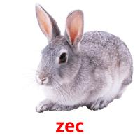 zec picture flashcards