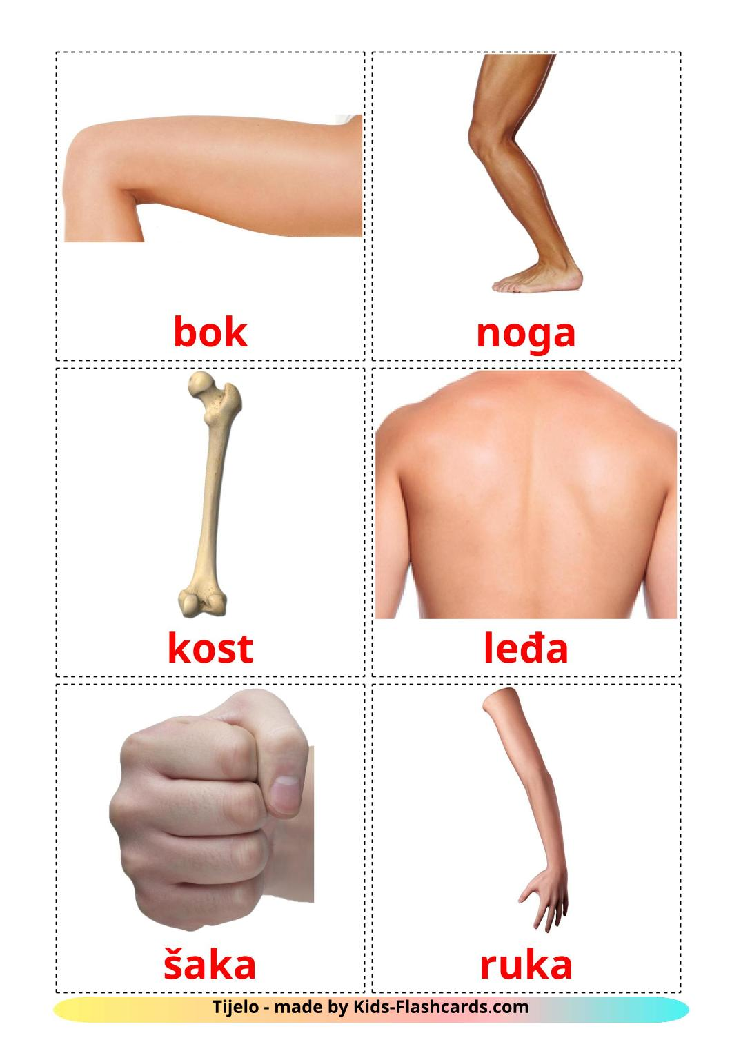 Body Parts - 26 Free Printable croatian Flashcards