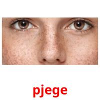 pjege picture flashcards