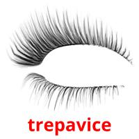 trepavice picture flashcards