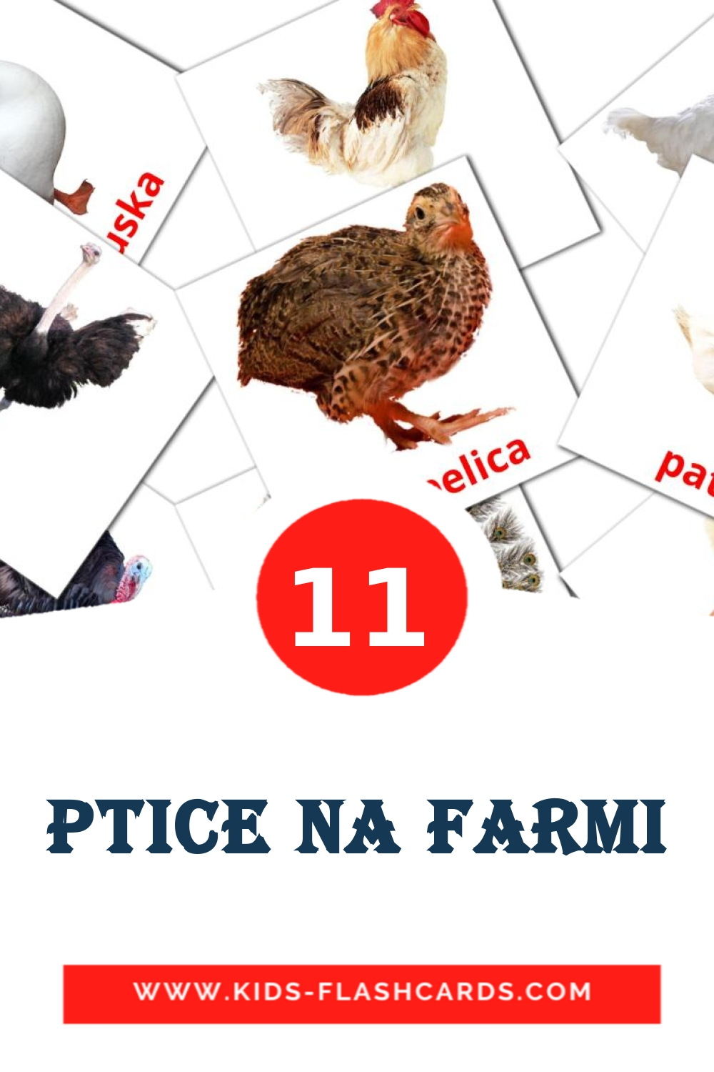 11 Ptice na farmi Picture Cards for Kindergarden in croatian