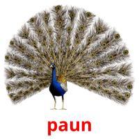 paun picture flashcards