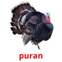puran picture flashcards