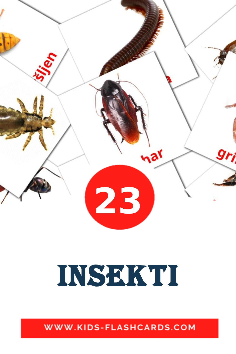 23 Insekti Picture Cards for Kindergarden in croatian