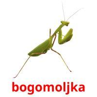 bogomoljka picture flashcards