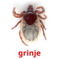 grinje picture flashcards