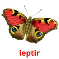 leptir picture flashcards