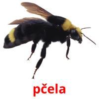 pčela picture flashcards
