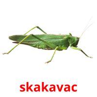 skakavac picture flashcards