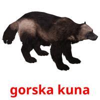 gorska kuna picture flashcards