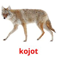kojot picture flashcards