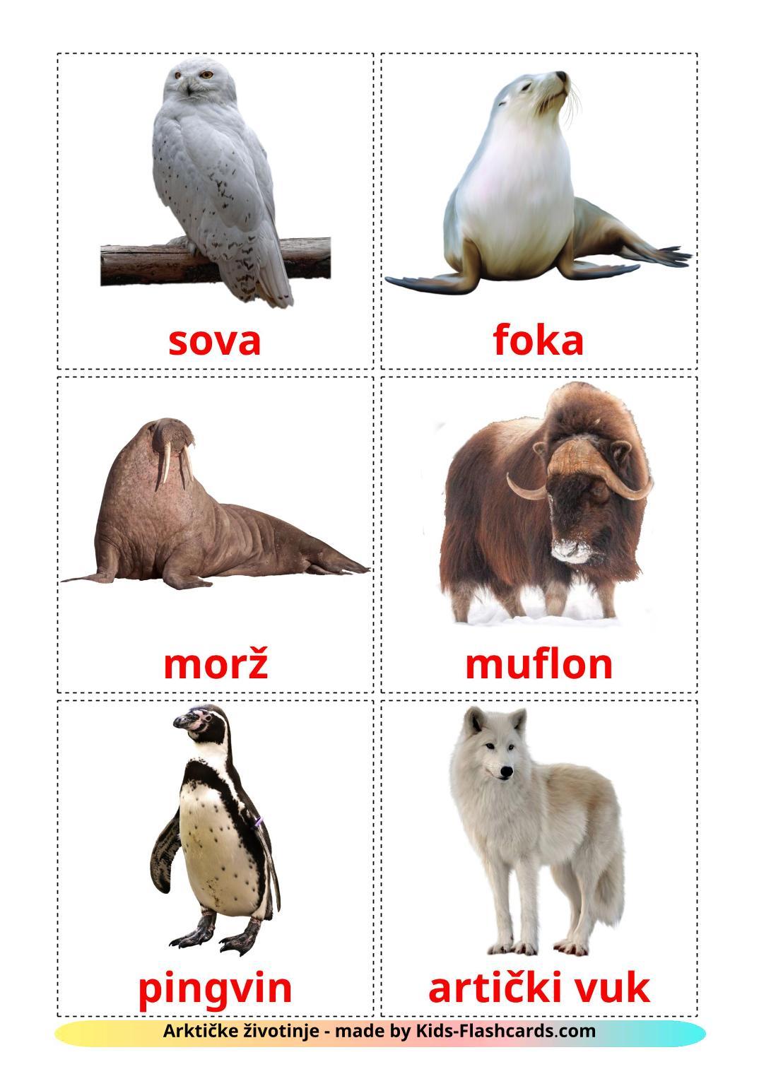 Arctic animals - 14 Free Printable croatian Flashcards