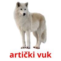 artički vuk picture flashcards