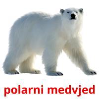polarni medvjed picture flashcards