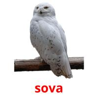 sova picture flashcards