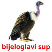 bijeloglavi sup card for translate