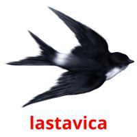 lastavica picture flashcards