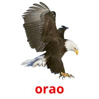 orao picture flashcards