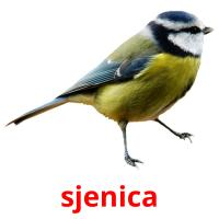 sjenica picture flashcards