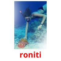 roniti picture flashcards