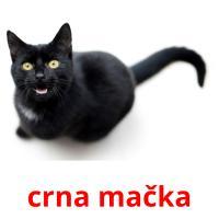 crna mačka picture flashcards