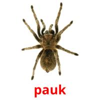 pauk picture flashcards