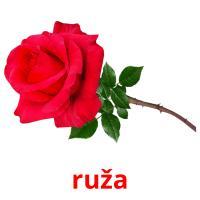 ruža picture flashcards