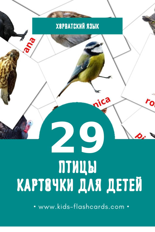 """""""ptice"""" - Визуальный Хорватском Словарь для Малышей (27 картинок)"""