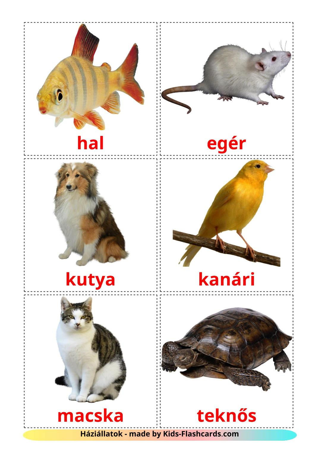 Domestic animals - 10 Free Printable hungarian Flashcards