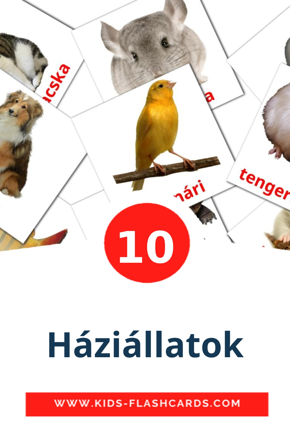 10 Háziállatok Picture Cards for Kindergarden in hungarian