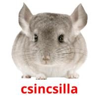 csincsilla picture flashcards
