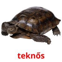 teknős picture flashcards