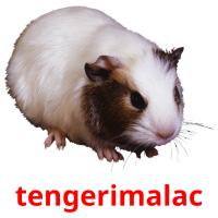 tengerimalac picture flashcards