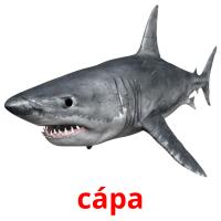 cápa picture flashcards