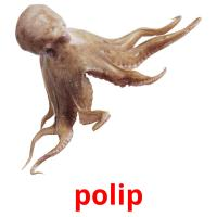 polip picture flashcards