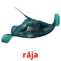 rája picture flashcards