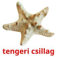 tengeri csillag picture flashcards