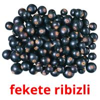 fekete ribizli picture flashcards