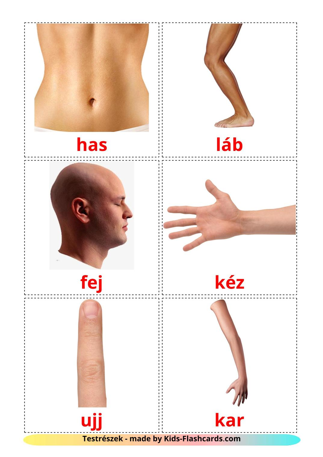 Body Parts - 26 Free Printable hungarian Flashcards