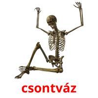 csontváz picture flashcards