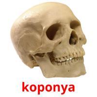 koponya picture flashcards