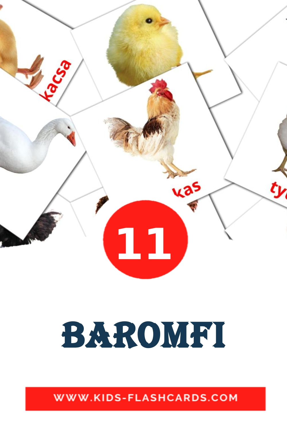11 Baromfi Picture Cards for Kindergarden in hungarian