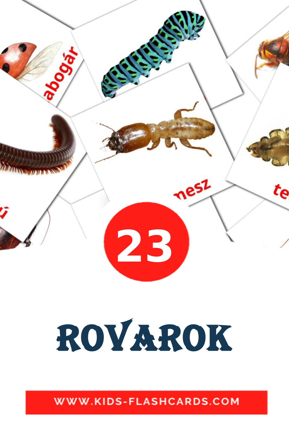 23 Rovarok Picture Cards for Kindergarden in hungarian