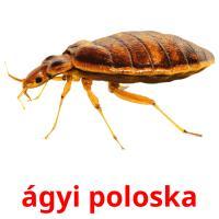ágyi poloska picture flashcards