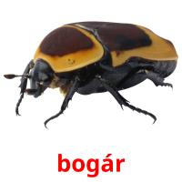 bogár picture flashcards