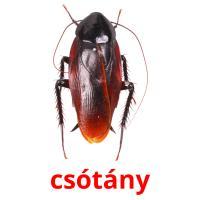 csótány picture flashcards