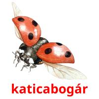 katicabogár picture flashcards